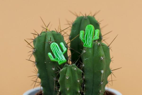 Finest imaginary, cactus jewellery