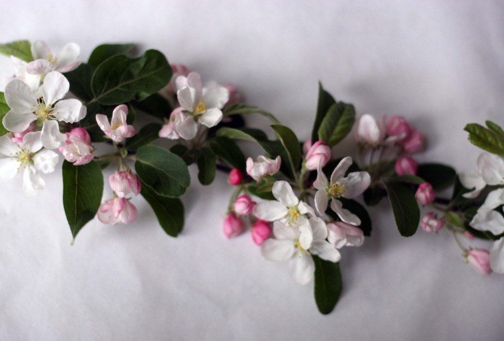 Frinn inspiration, flowers