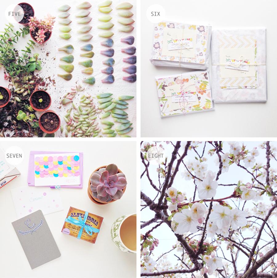 Instagram for designers, instagram tips, caren barry instagram, carry barry patterns, succulents, styling