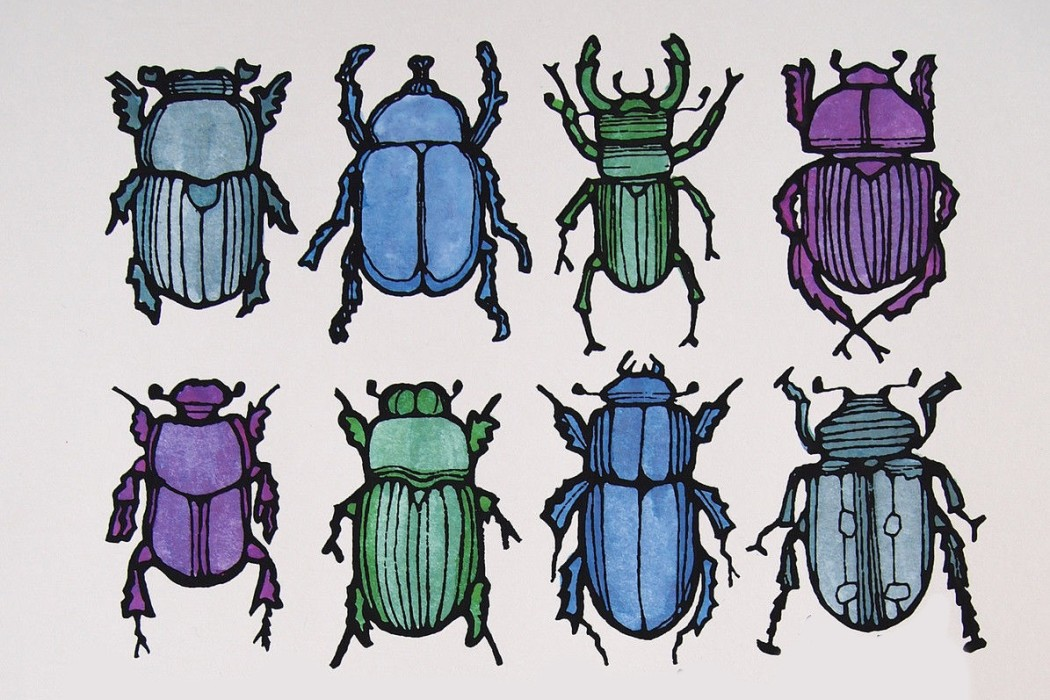 bugs, beetles, screenprint, bugs screenprint, tournesol