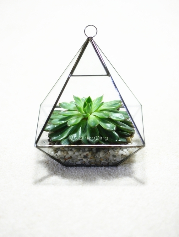 terrarium for succulents uk