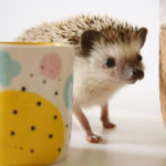 A hedgehog called Herb, Natko Ceramics