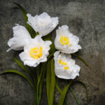 paper flower project, paper flower DIY, Lia Griffith, Instagram, paper daffodils