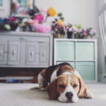 Beagle, Paper Bea Flowers,