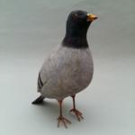 Jeff Soan, jeff soan pigeon,