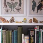 Silverpasta, butterflies,