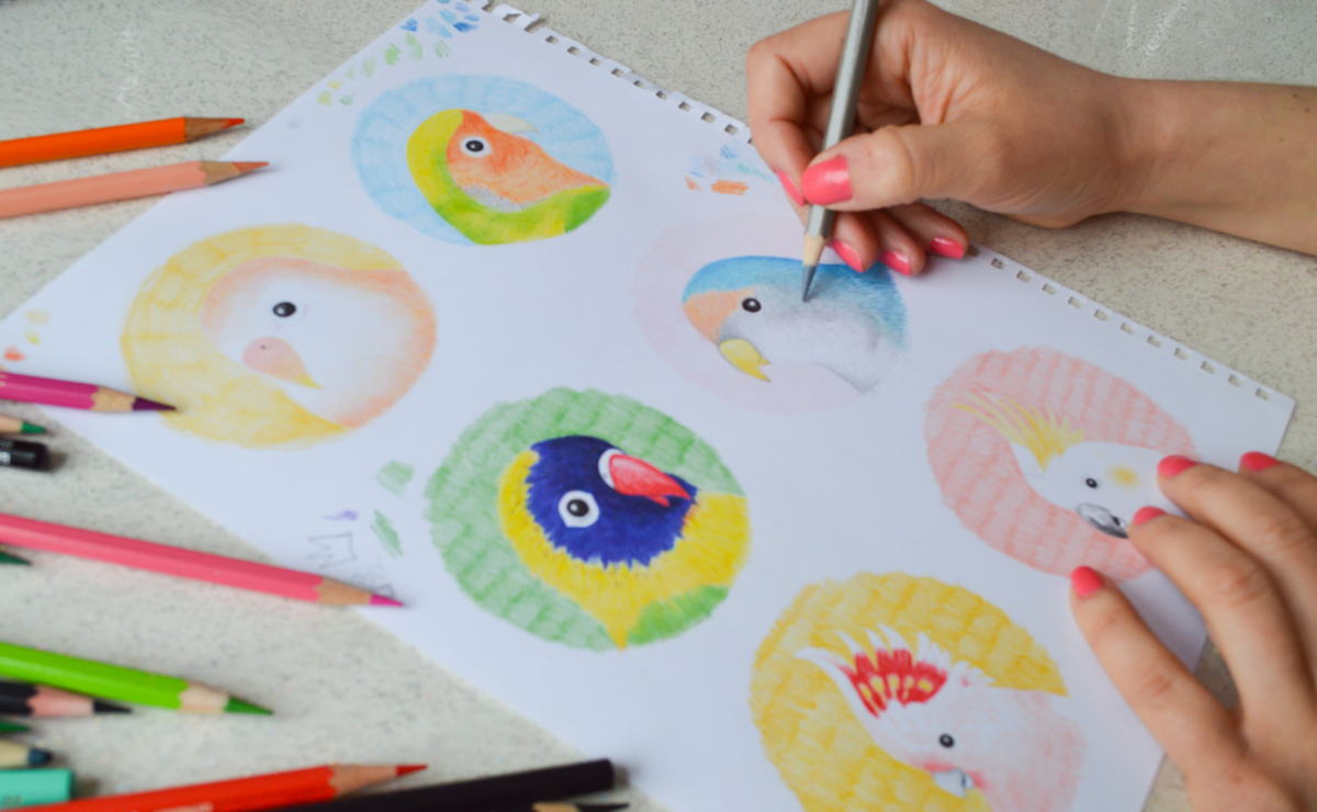 parrot drawings, parrot illustrations, bird drawings, The Catkin Boutique,