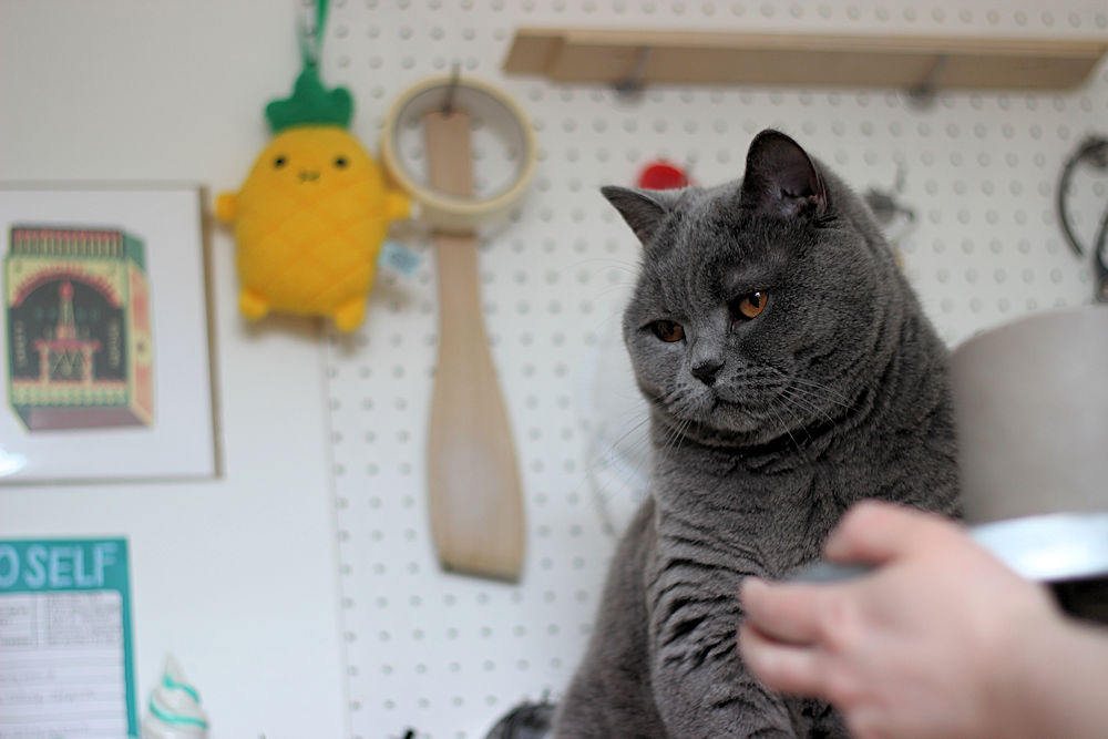 Natko Ceramics, meetthemaker, handmade ceramics, potter's cat, craft companion,
