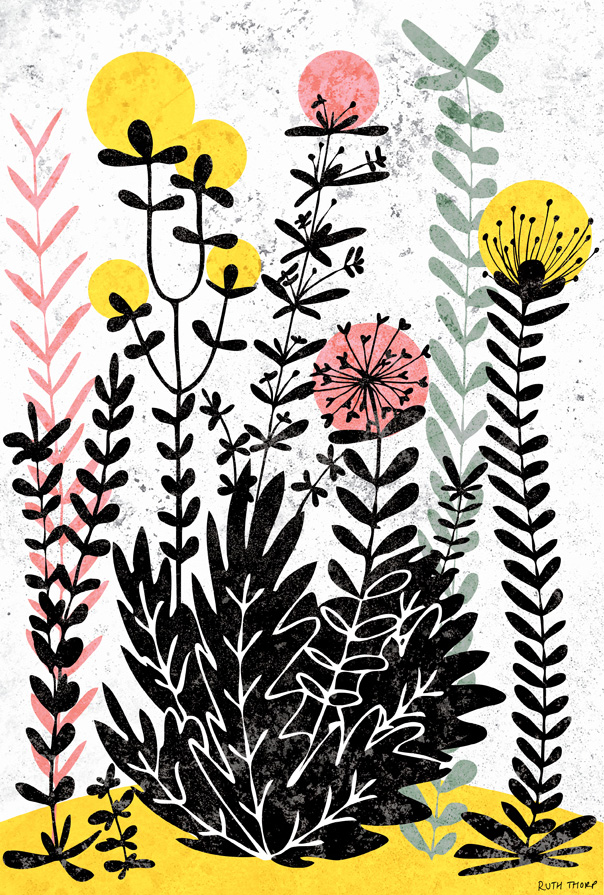 meadow flowers illustration, Ruth Thorp, Ruth Thorp illustrator, UK illustration, illustrated art prints, meet the maker,