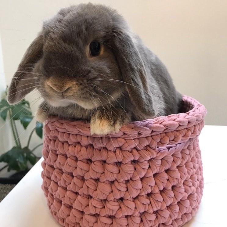 Clare Gets Crafty Crochet Bunny Basket