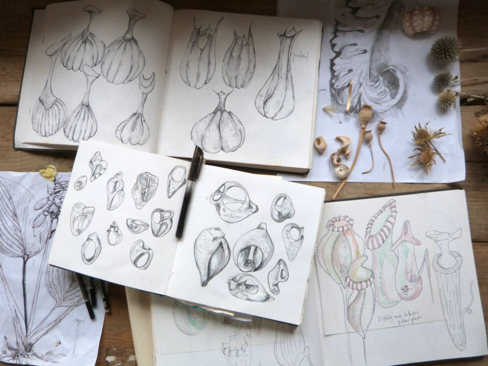 Sketchbooks with drawings by Louise Condon, Ceramic Botanist